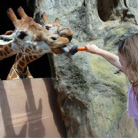 Блог Павла Аксенова. Зоопарк Таронга (Taronga Zoo). Bridget-and-Giraffe_credit Lorinda Taylor