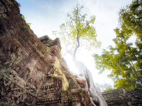 Камбоджа. Храмовый комплекс Ангкор. Angkor Wat Cambodia. Ta Prom Khmer ancient Buddhist temple in jungle forest. Фото sergwsq - Depositphotos