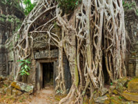 Камбоджа. Храмовый комплекс Ангкор. Angkor Wat monk. Ta Prom Khmer ancient Buddhist temple in jungle forest. Фото DmitryRukhlenko - Depositphotos