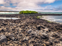 Эквадор. Галапагосские острова. Galapagos Islands. Marine Iguanas in Tortuga Bay in Santa Cruz Island, Galapagos Islands, Ecuador. Фото RPBMedia - Depositphotos