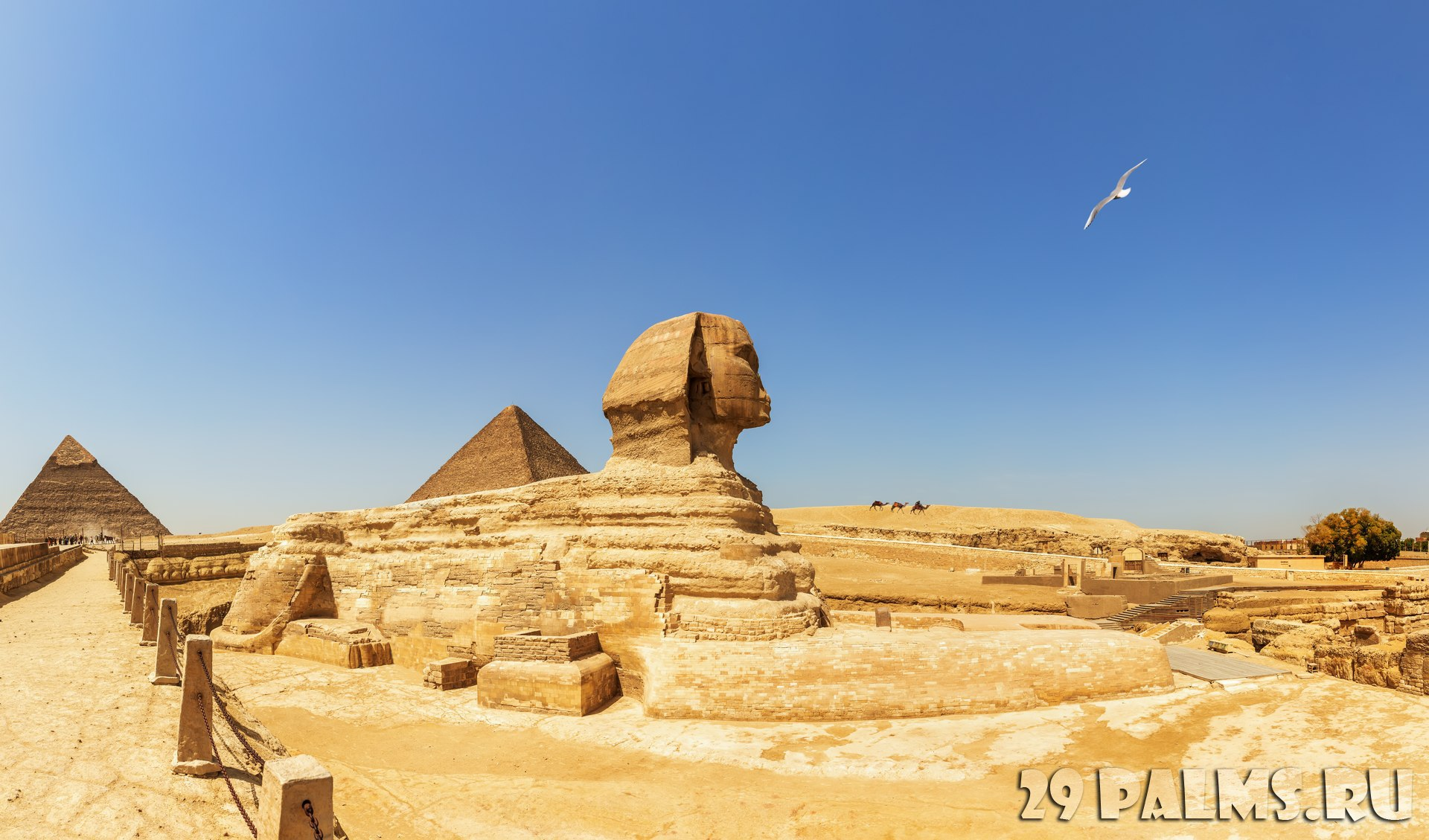 Египет. Гиза. Большой сфинкс. Pyramids of Giza panorama, view on the Sphinx, the Pyramid of Cheops and the Pyramid of Chephren. Egypt. Фото antonaleksenko82-D