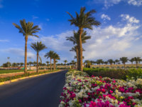 Египет. Синай. Шарм-эль-Шейх. Beautiful views of the flowers and palm trees. The road to the hotel. Sharm el-Sheikh. Egypt. Фото A_Petrus - Depositphotos