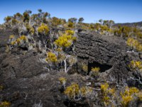Заморские территории Франции. Остров Реюньон. Volcanic vegetation, Piton de La Fournaise at Reunion Island. Фото fontaineg974-Depositphotos