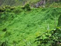 Заморские территории Франции. Остров Реюньон. Plants covering ground in cirque de salazie on la reunion island. Фото neofelizz-Depositphotos