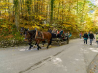 Германия. Бавария. Швангау. Bavaria, Germany. Tourists riding in horse carriage near Neuschwanstein Castle. Фото Rostislavv - Depositphotos