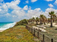 Израиль. Ашкелон. View on promenade with palms along Mediterranean sea coastline in Ashkelon, Israel. Фото rglinsky-Depositphotos