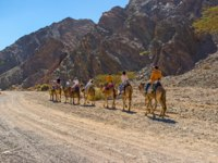 Израиль. Эйлат. Активный отдых. Camel safari in Masiv Eilat Nature Reserve among the rocky mountains in Eilat. Israel. Фото efesenko - Deposit