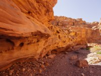 Израиль. Эйлат. Красный каньон. Way to Red canyon in the Israil in sunny day with dry tree and blue sky. Фото badziulia.gmail.com - Depositphotos