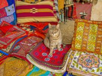 Израиль. Иерусалим. The puss sits on the handmade embroidered pillowcases in the Aftimos Market stall, Jerusalem, Israel. Фото efesenko - Depositphotos