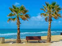 Клуб путешествий Павла Аксенова. Израиль. Акко. Two green palms and the bench in the middle in promenadde of Acre, Israel. Фото efesenko - Depositphotos