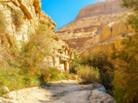 Израиль. Национальный природный парк Эйн-Геди. Ein Gedi Nature Reserve is perfect to enjoy the desert climate, but for tired tourists there are some shady areas
