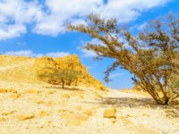 Израиль. Национальный природный парк Эйн-Геди. Landscape of desert cliffs, in the Ein Gedi Nature Reserve, Judaean Desert, Southern Israel. Фото RnDmS-Deposit