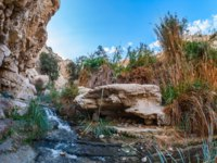 Израиль. Национальный природный парк Эйн-Геди. Typical landscape of the Middle East. The stream of cold pure water flows through the beautiful gorge Ein Gedi