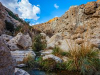 Израиль. Национальный природный парк Эйн-Геди. The stream of cold clear water flows on the beautiful gorge of Ein-Gedi. Typical Middle Eastern landscape