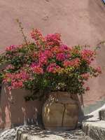 Италия. Сицилия. Форца-д'Агро. Colorful plant in a clay flower pot in a courtyard in Sicily. Фото RubinowaDama - Depositphotos