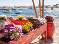 Италия. Сицилия. Марцамеми. Flowered vases next to the harbor of the small sea village Marzamemi, Sicily, with fishing boats. Фото siculodoc - Deposit
