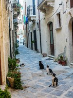 Италия. Сицилия. Сиракузы. Cat sitting in a Street in the historical quarter of Ortigia in Syracusa, Sicily. Фото laudibi.gmail.com - Depositphotos
