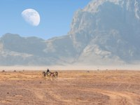 Camels in incredible lunar landscape in Wadi Rum in the Jordanian desert with huge moon above. Wadi Rum also known as The Valley. Фото leshiy985 - Deposit