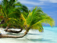 Мальдивы. Maldives with palm, sand and ocean. Фото yellow2j - Depositphotos