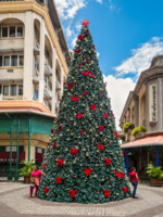 Port Louis, Mauritius. Christmas tree in the tropics, on the waterfront of Port Louis, capital of Mauritius. Фото vale_t - Depositphotos