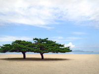 Северная Корея. Two lone korean pines at famous sondovon sea beach at North Korea. Фото iggy74 - Depositphotos