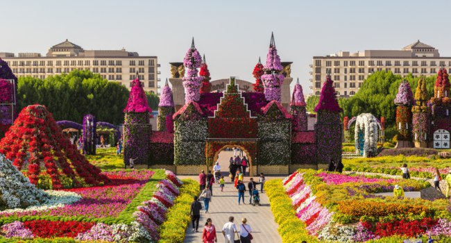 ОАЭ. Дубай. Сад чудес. Panorama of Miracle Garden. Dubai. UAE. Фото bloodua - Depositphotos