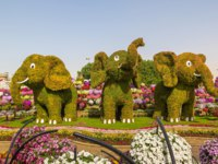 ОАЭ. Дубай. Сад чудес. Dubai miracle garden in a sunny day , United Arab Emirates. Фото bloodua - Depositphotos
