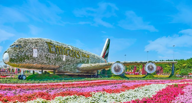 ОАЭ. Дубай. Сад чудес. Petunia flower beds with Emirates A380 aircraft installation, covered with white flowers, Miracle Garden in Dubai. Фото efesenko - Depositphotos