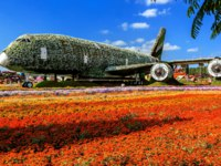 ОАЭ. Дубай. Сад чудес. The Emirates A380 plane on the green lawn among the flowers of Miracle Garden in Dubai. Фото Alexey_Arz - Depositphotos