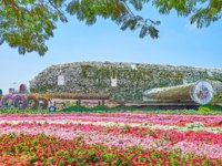 ОАЭ. Дубай. Сад чудес. Enjoy the unique airplane installetion, located among petunia flower beds in Miracle Garden in Dubai. Фото efesenko - Depositphotos