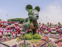 ОАЭ. Дубай. Сад чудес. Miracle Garden with over 45 million flowers on a sunny day, Flower Garden in Dubai, UAE. Фото clicksbyabrar - Depositphotos