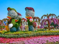 ОАЭ. Дубай. Сад чудес. The popular Walt Disney cartoon characters - Huey, Dewey and Louie Duck in Miracle Garden in Dubai. Фото efesenko - Depositphotos