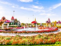 ОАЭ. Дубай. Сад чудес. Beautiful Flourish Landscape of Miracle Garden with over 45 million flowers, Flower Garden in Dubai, UAE. Фото clicksbyabrar - Depositphotos