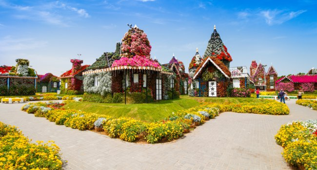 ОАЭ. Дубай. Сад чудес. Panorama of Miracle Garden. Dubai. UAE. Фото rebius - Depositphotos