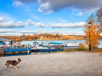 Золотое кольцо России. Плес. Dog on the pier. Pleasure boat on the banks of the Volga in the city of Plyos in the autumn sunny day. Фото yulenochekk - Depositphotos