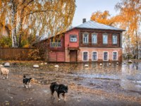 Золотое кольцо России. Плес. Three dogs walk past the Oreshins House in Plyos on an autumn rainy. Фото yulenochekk - Depositphotos