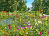 Золотое кольцо России. Суздаль. The lush wildflower meadow in Intercession Monastery with bright blooming summer flowers, Suzdal, Russia. Фото efesenko - Depositphotos