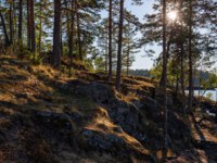 The morning sun awakens the nature of Valaam Island. The wonderful island Valaam is located on Lake Lodozhskoye, Karelia. Фото GeneralSky-Depositphotos