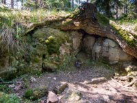 The roots of the tree caringly embraced the stone slabs. The wonderful island Valaam is located on Lake Lodozhskoye, Karelia. Фото GeneralSky-Depositphotos