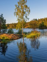 Birch in the sun is reflected in the lake. The wonderful island Valaam is located on Lake Lodozhskoye, Karelia. Фото GeneralSky-Depositphotos