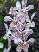 Клуб путешествий Павла Аксенова. Сингапур. Сад орхидей. Orchid in Singapore Botannical Gardens. Фото phil_bird - Depositphotos