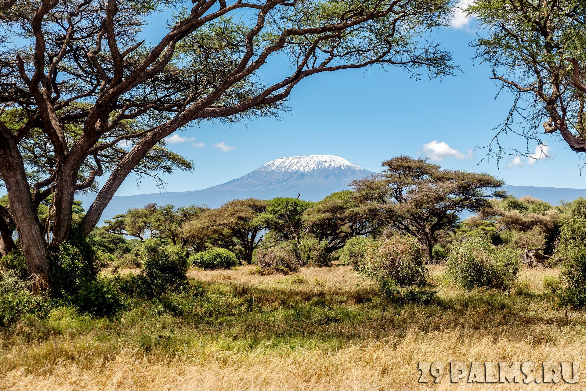 Клуб путешествий Павла Аксенова. Танзания. Гора Килиманджаро. Snow on the top of the Mount Kilimanjaro in Amboseli. Фото dvrcan - Depositphotos