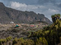 Танзания. Гора Килиманджаро. The campsite at Barranco with a number of large Senecio trees in the foreground. Фото mountaintreks - Depositphotos