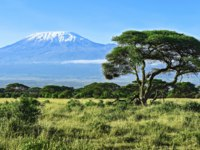 Гора Килиманджаро. Mount Kilimanjaro in Kenya Amboseli National Park. Фото kyslynskyy - Depositphotos