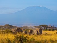 Family of elephants walking in front of the Kilimanjaro mountain. Amboseli National Park. Фото  Francois_Gagnon - Depositphotos
