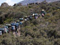 A group of porters passing through the moorland zone on Rongai Route with Mawenzi looming in background. Фото mountaintreks - Depositphotos