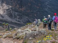 Танзания. Восхождение на гору Килиманджаро. Group moving down to the campsite at Barranco after acclimatising at Lava Tower. Фото mountaintreks - Depositphotos