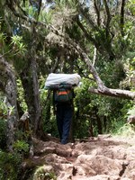 Танзания. Восхождение на гору Килиманджаро. A porter passing through the rain forest on the way back down off Kilimanjaro. Фото mountaintreks - Depositphotos