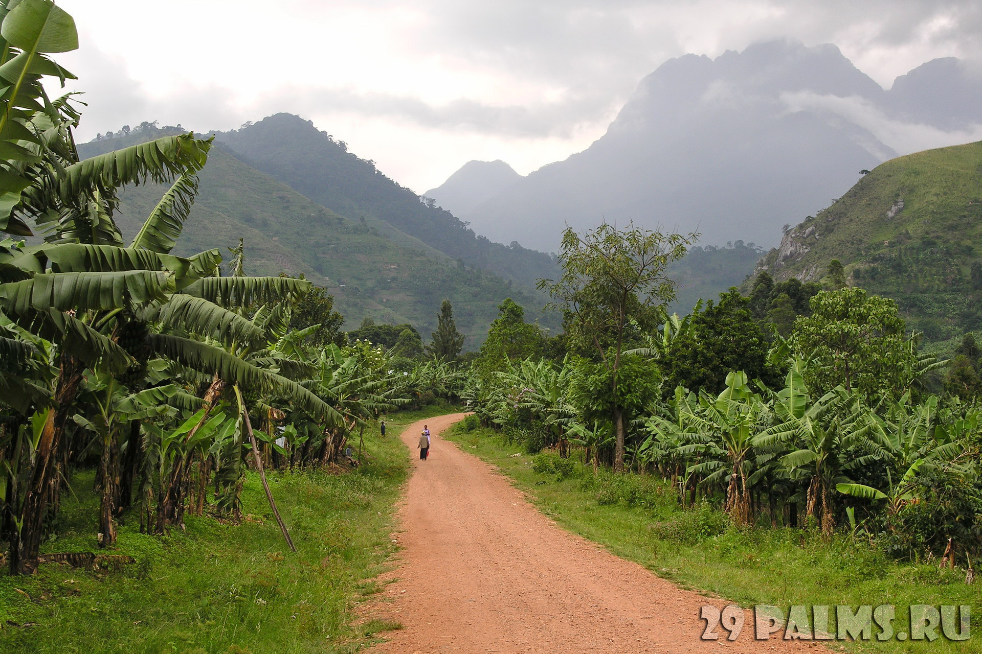 Конго - Уганда. Горы Рувензори (Rwenzori Mountains). Road landscape with Ruwenzori Mountains, Uganda. Фото vlad_k - Depositphotos