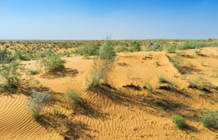 The beautiful dune in Kyzyl Kum covered with shrubs of saxaul (haloxylon), Uzbekistan. Фото efesenko - Depositphotos